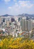 Vista superiore del centro di Seoul con i fiori della molla immagine stock libera da diritti
