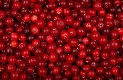 Vista superiore del fondo maturo rosso fresco dei mirtilli rossi Immagini Stock