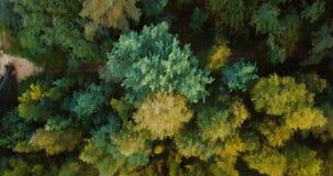 Vista superiore del fuco aereo della foresta e delle conifere nel Nord Paesaggio russo con i pini e l'abete, giorno soleggiato de stock footage