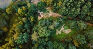 Vista superiore del fuco aereo della foresta e delle conifere nel Nord Paesaggio russo con i pini e l'abete, giorno soleggiato de video d archivio