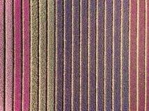 Vista superiore del fuco dai giacimenti di fiore colourful dentro ronzio Fotografia Stock Libera da Diritti