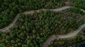 Vista superiore del fuco statico sparata della strada in foresta stock footage