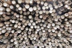 Vista superiore del gambo dei bambù Immagini Stock