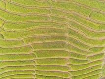 Vista superiore del giacimento a terrazze del riso in collina Fotografia Stock Libera da Diritti