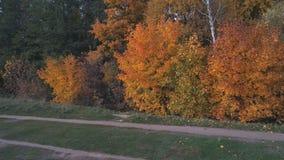 Vista superiore del paesaggio della Russia centrale con gli alberi che sono coperti di fogliame di autunno video d archivio