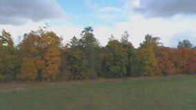 Vista superiore del paesaggio della Russia centrale con gli alberi che sono coperti di fogliame di autunno stock footage