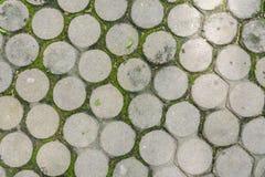 Vista superiore del pavimento del blocchetto del cemento con muschio verde Immagine Stock Libera da Diritti