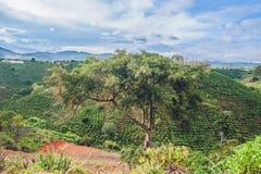 Vista superiore del riso e della capanna a terrazze di agricoltura sulla collina Veitna Fotografia Stock