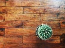 Vista superiore del singolo cactus verde in vaso di plastica sulla tavola di legno fotografia stock libera da diritti