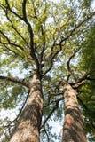 Vista superiore dell'albero immagine stock libera da diritti