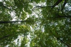 Vista superiore dell'albero fotografie stock libere da diritti