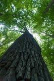 Vista superiore dell'albero fotografie stock