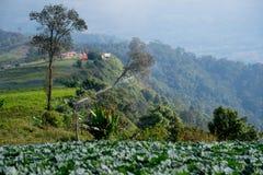 Vista superiore dell'azienda agricola del cavolo delle case del villaggio fra gli alberi verdi agli altopiani Immagine Stock