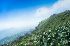 Vista superiore dell'azienda agricola del cavolo delle case del villaggio fra gli alberi verdi agli altopiani Fotografia Stock