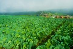 Vista superiore dell'azienda agricola del cavolo delle case del villaggio fra gli alberi verdi agli altopiani Fotografie Stock