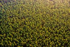 Vista superiore della foresta Fotografie Stock