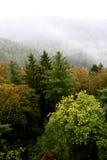 Vista superiore della foresta di autunno Fotografie Stock Libere da Diritti
