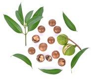 Vista superiore della frutta della noce di macadamia isolata su fondo bianco immagine stock libera da diritti
