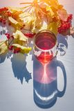 Vista superiore della tazza di vetro di tè nero il giorno soleggiato di autunno con le ombre lunghe e del ramo del viburno con le immagini stock