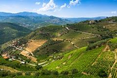 Vista superiore della valle del Duero, Portogallo Fotografie Stock Libere da Diritti
