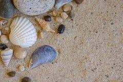 Vista superiore delle conchiglie e delle rocce sul fondo della sabbia Fotografia Stock Libera da Diritti