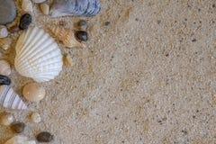 Vista superiore delle conchiglie e delle rocce sul fondo della sabbia Fotografia Stock