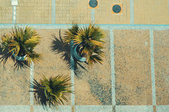 Vista superiore delle palme e del pavè decorativi a Rio immagine stock libera da diritti
