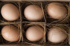 Vista superiore delle uova di Brown organiche in cartone sparato in studio Fotografia Stock Libera da Diritti