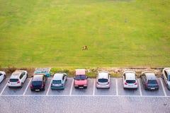 Vista superiore di parcheggio costruzione multipiana e del cane che si trovano sul verde Fotografia Stock Libera da Diritti