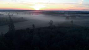 Vista superiore di volo aereo: Paesaggio nebbioso spettrale spaventoso di buio della natura di mattina - paesaggio nebbioso archivi video
