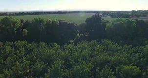 vista superiore 4K della foresta stock footage
