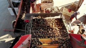 Vista superiore lo speciale ha meccanizzato il processo della patata che ordina all'azienda agricola le patate sono scaricate sul video d archivio