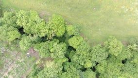 Vista superiore sopra il verde della campagna con gli alberi ed il prato enormi stock footage