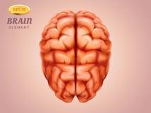Vista superiore sul cervello Mente umana Medicina, anatomia illustrazione di stock