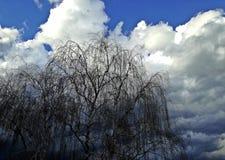 Vista surpreendente do balcão céu azul, nuvens brancas perfeitas e árvore fotos de stock royalty free
