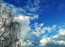 Vista surpreendente do balcão céu azul, nuvens brancas perfeitas e árvore foto de stock royalty free