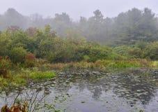 Vista surreale di zona umida in nebbia di mattina Immagini Stock Libere da Diritti