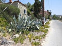 Vista tipica della Grecia piante di vecchie di un aloe della costruzione e di una via vuota nel calore di estate Immagini Stock