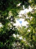 Vista tramite le foglie fotografie stock libere da diritti