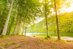 Vista tranquilla del lago della montagna Foresta di superficie e verde dell'acqua calma e della barca di legno del pino fotografie stock
