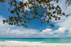 Vista tranquilla di fogliame, del mare del turchese e del bianco Sandy Beach Fotografie Stock