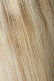 Vista trasera del pelo rubio Imagenes de archivo
