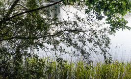 Vista between the tree branches at the edge of a lake Royalty Free Stock Photography