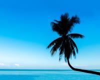 Vista tropical del árbol de coco de la curva de la silueta en la playa con el cielo azul y el mar Fotos de archivo libres de regalías