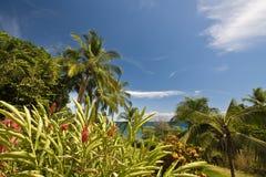 Vista tropicale Fotografie Stock Libere da Diritti