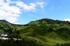 Vista tropicale del tè Fotografia Stock Libera da Diritti