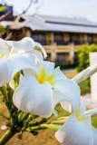 Vista tropicale della località di soggiorno in Tailandia fotografia stock