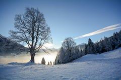 Vista a uma paisagem do inverno com árvore e o vale velhos perto de Gastein mau, cumes de Pongau - Salzburg Áustria Imagens de Stock