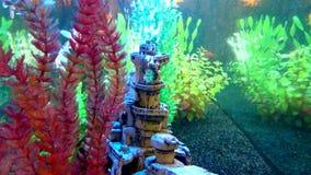 Vista in un acquario con il pesce rosso di galleggiamento archivi video