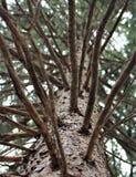 Vista unica dell'albero Fotografie Stock